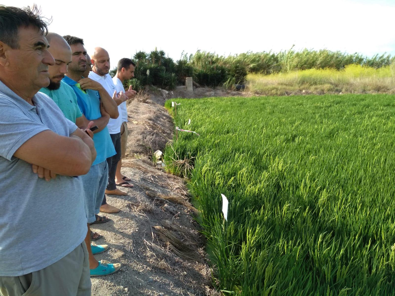 AVA-ASAJA y Agriges presentan en La Albufera un tratamiento nutricional ecológico para el arroz